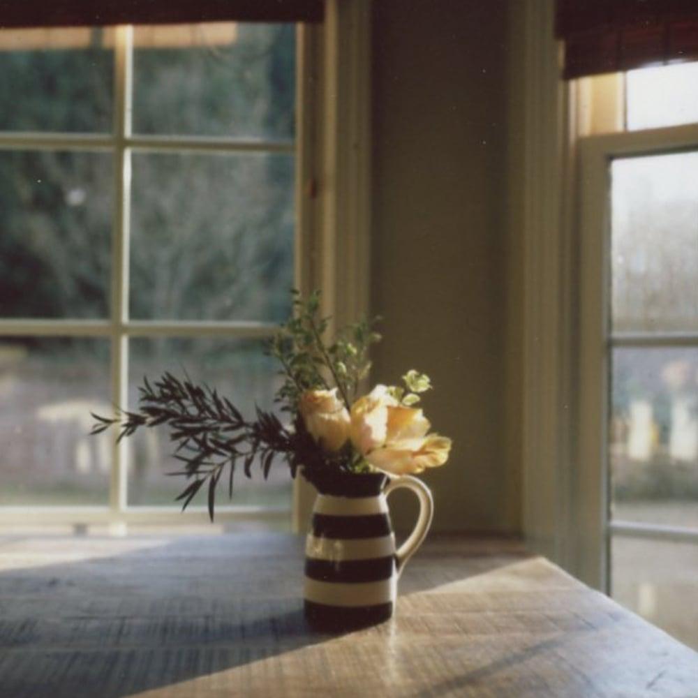 Hasselblad 500cm | Fuji Fp 100c | Film Photography | Azzari Jarrett