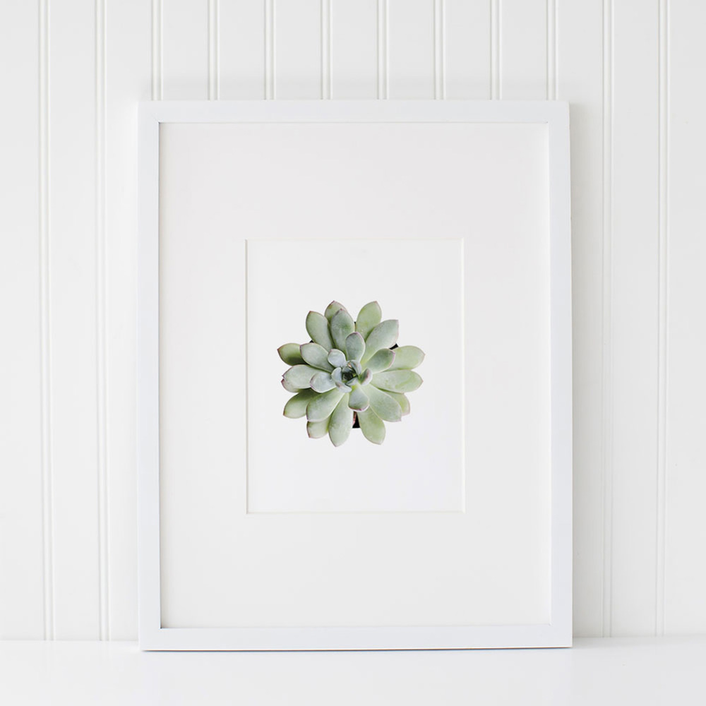 Azzari Jarrett | Succulent Printable