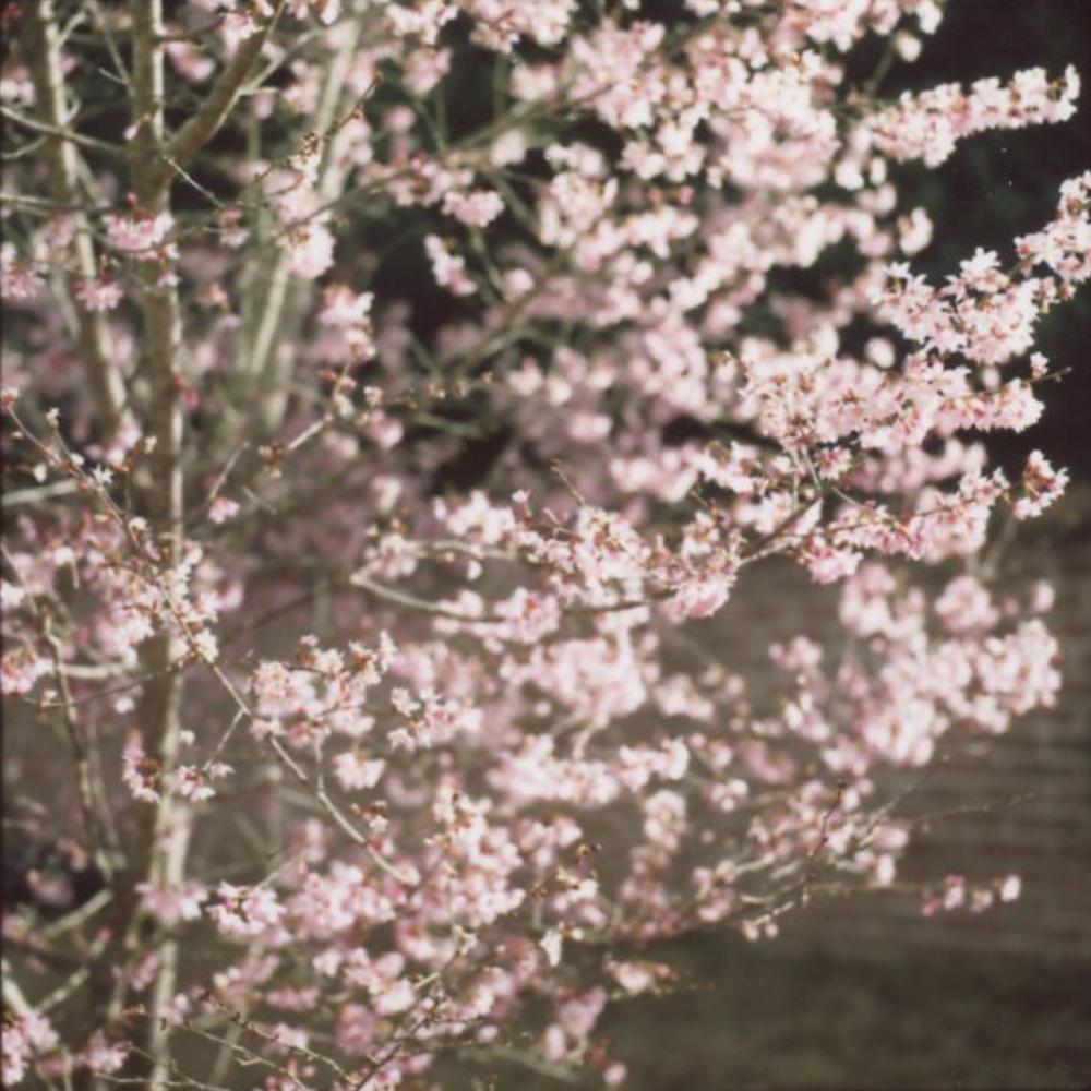 Almost Spring | Hasselblad 500c | Fuji FP 100c Film | Azzari Jarrett