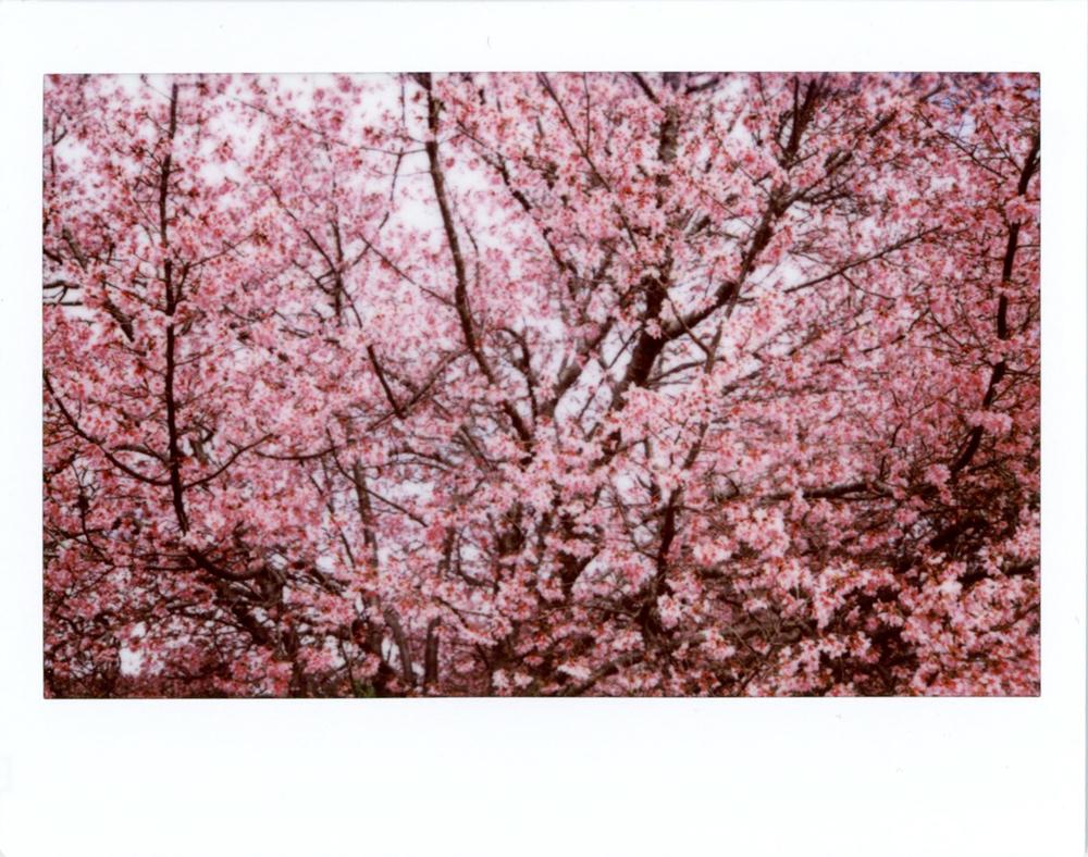 Instax Wide Spring 2016 | Azzari Jarrett