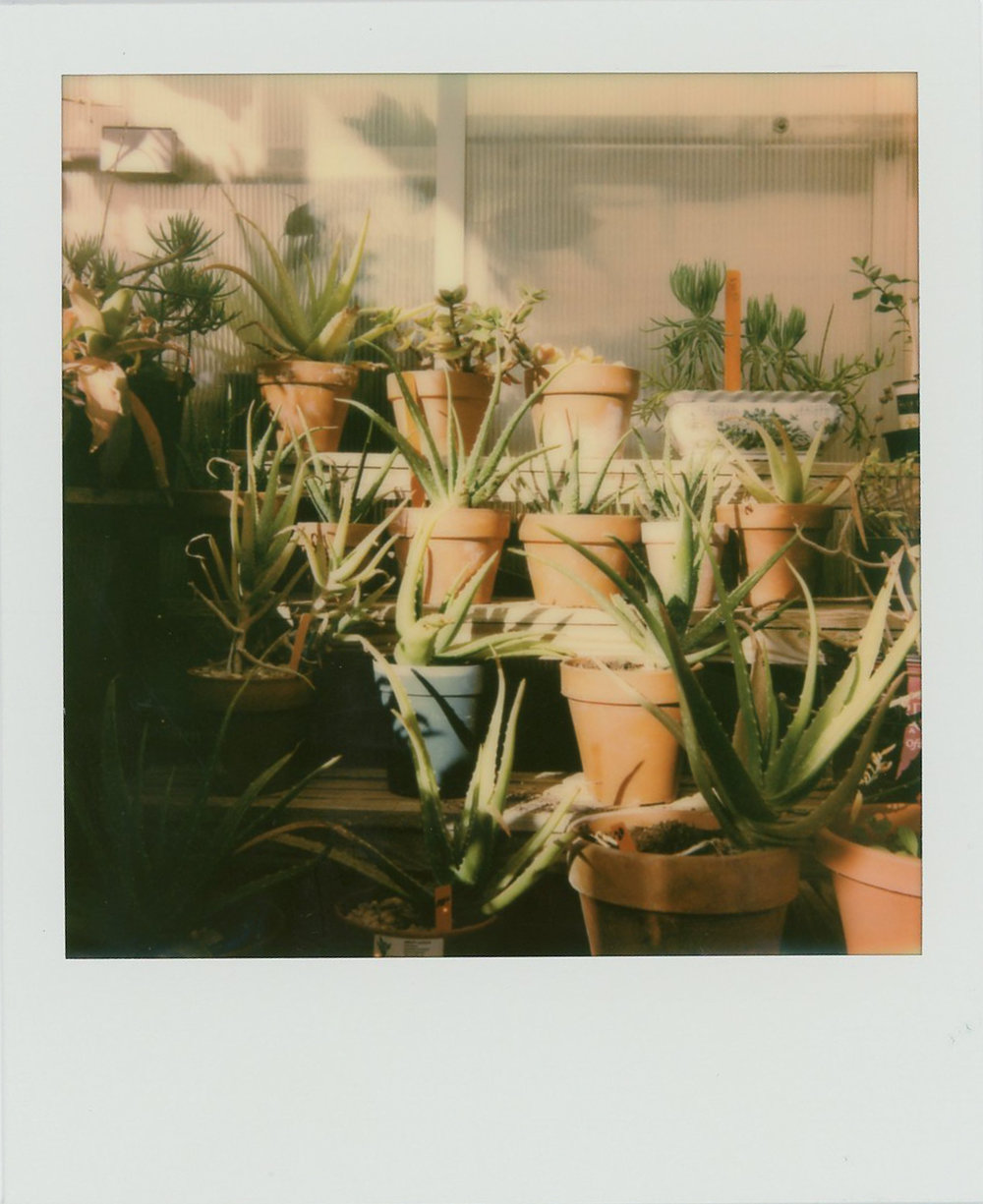 Azzari Jarrett | On Capturing Spring on Instant Film
