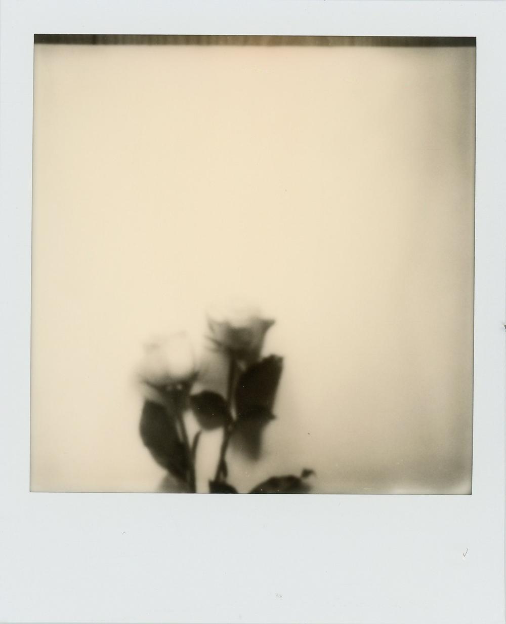 Azzari Jarrett | Polaroid Film