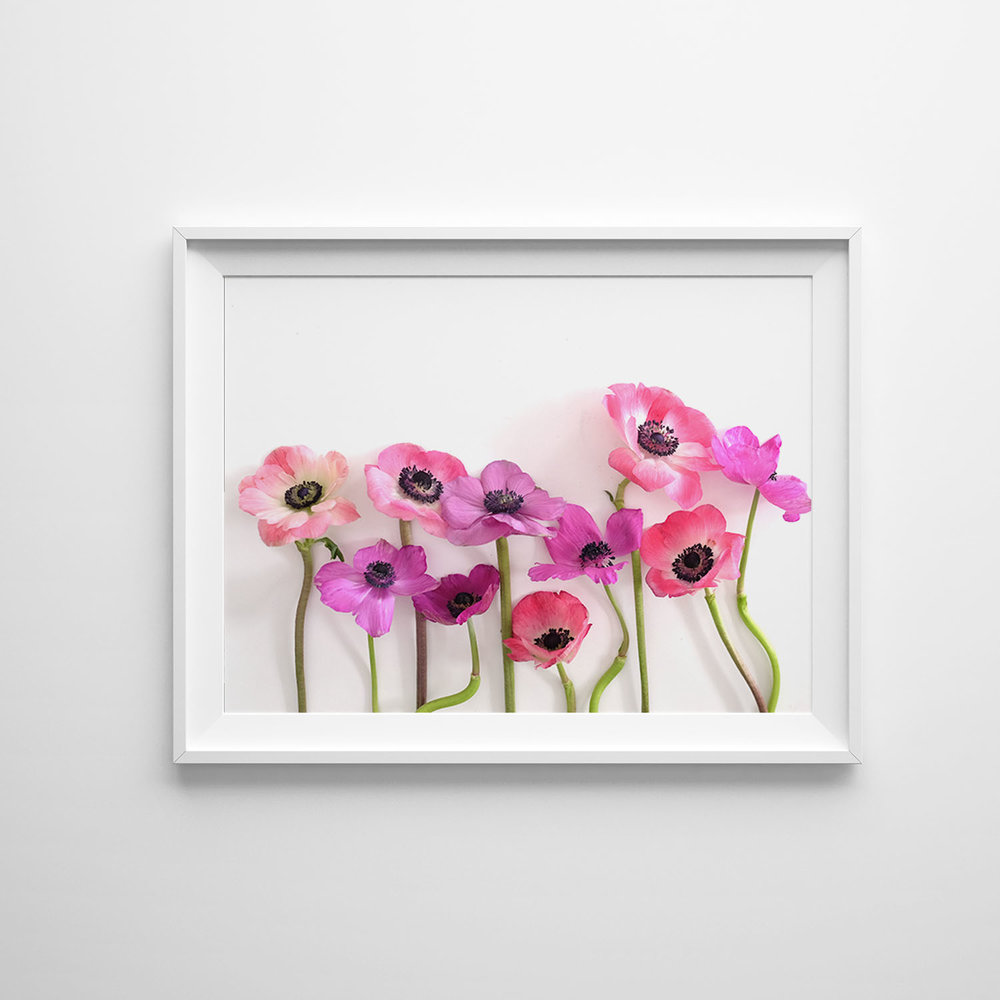 Azzari Jarrett | Anemone Collection Fine Art Photography