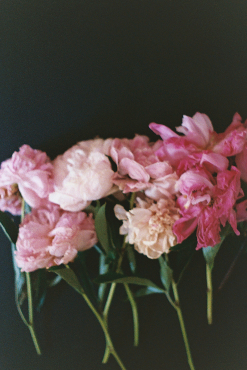 Azzari Jarrett | January 2019 | Film | Peonies