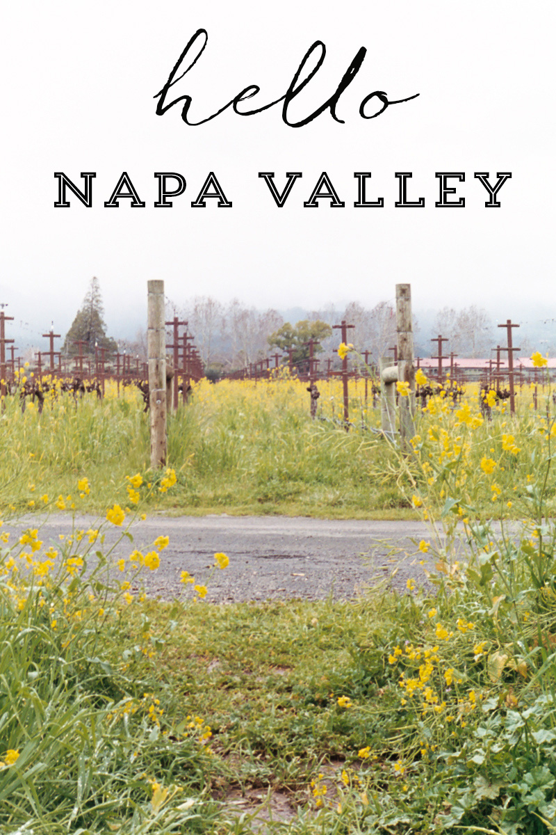 Travels | Napa Valley on 35mm film by Azzari Jarrett