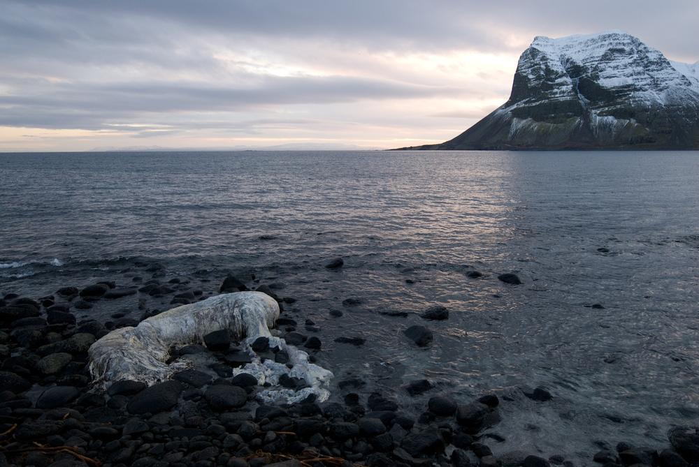 0214 feb iceland (7 of 41).jpg