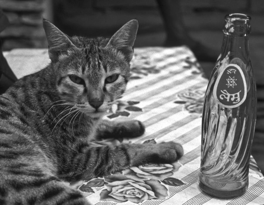 Cat and Nepali Coke