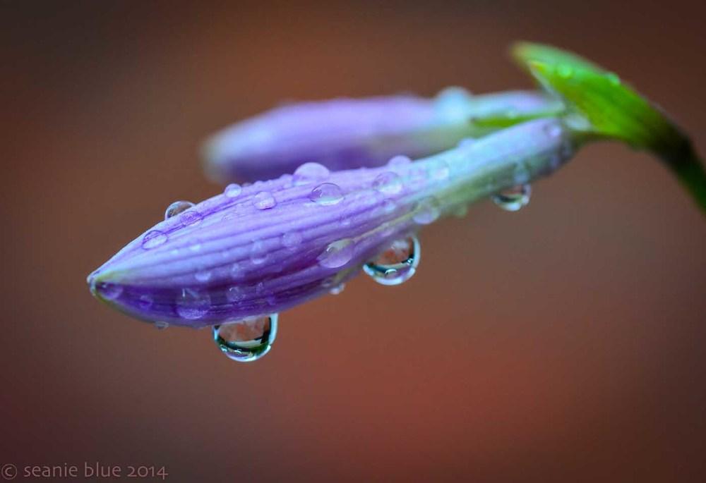 flowers rain 1400 38 (1 of 2).jpg