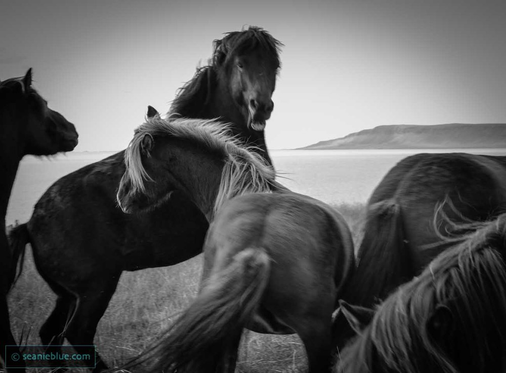 HORS fight BW 1300 35 (1 of 1).jpg