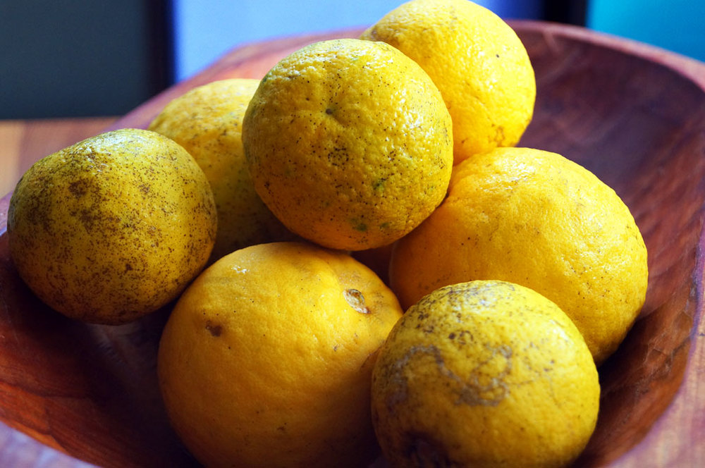 Sour oranges for Cuban Mojo Criollo Marinade & Dressing