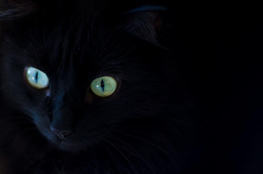 bubo-eyes1-web.jpg