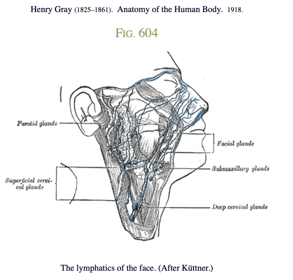 The lymphatics of the face