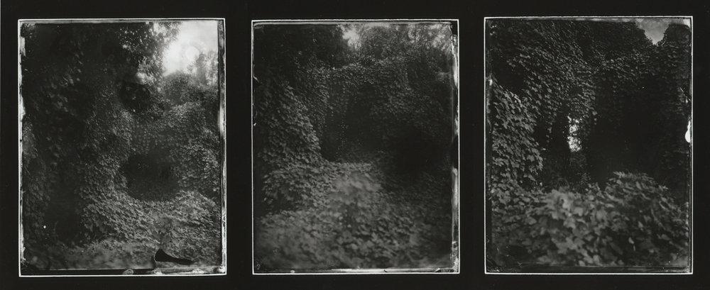 CollodionLandscapes-17.JPG