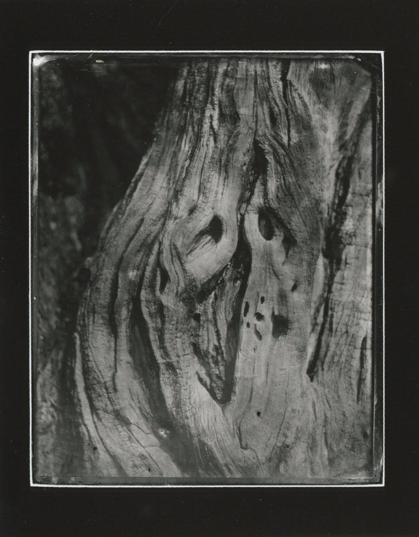 CollodionLandscapes-16.JPG