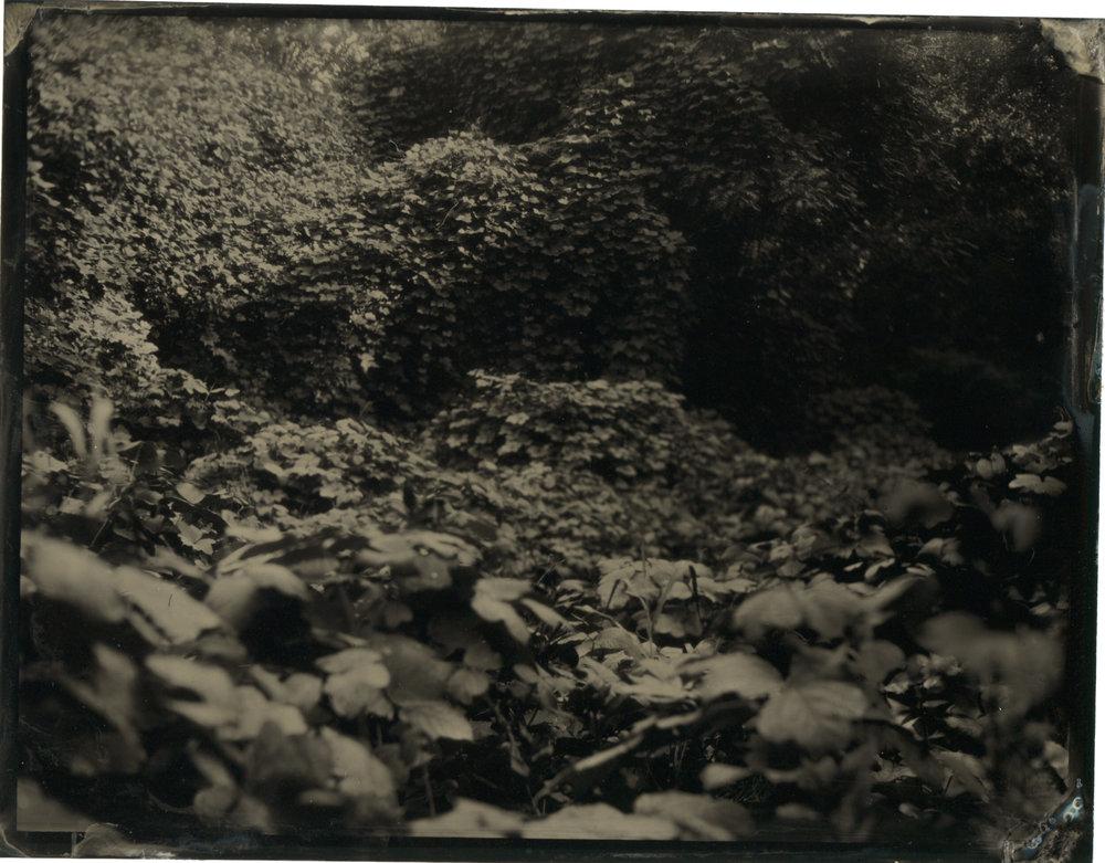 CollodionLandscapes-42.JPG