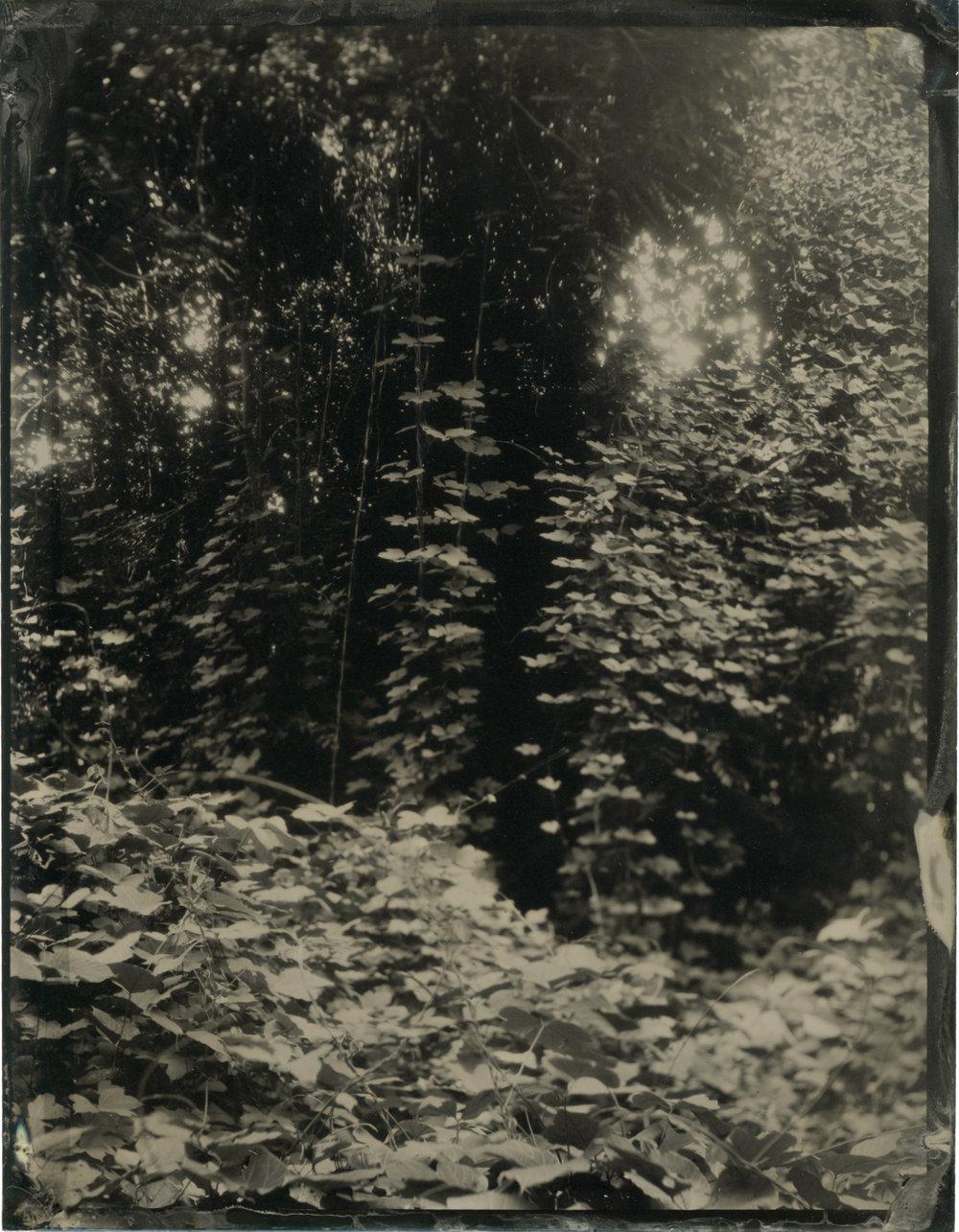 CollodionLandscapes-43.JPG