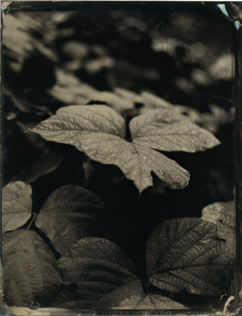 CollodionLandscapes-45.JPG