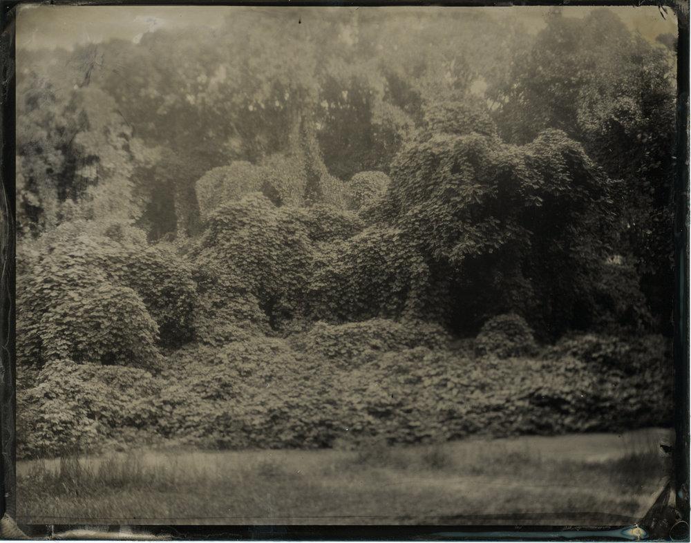 CollodionLandscapes-47.JPG