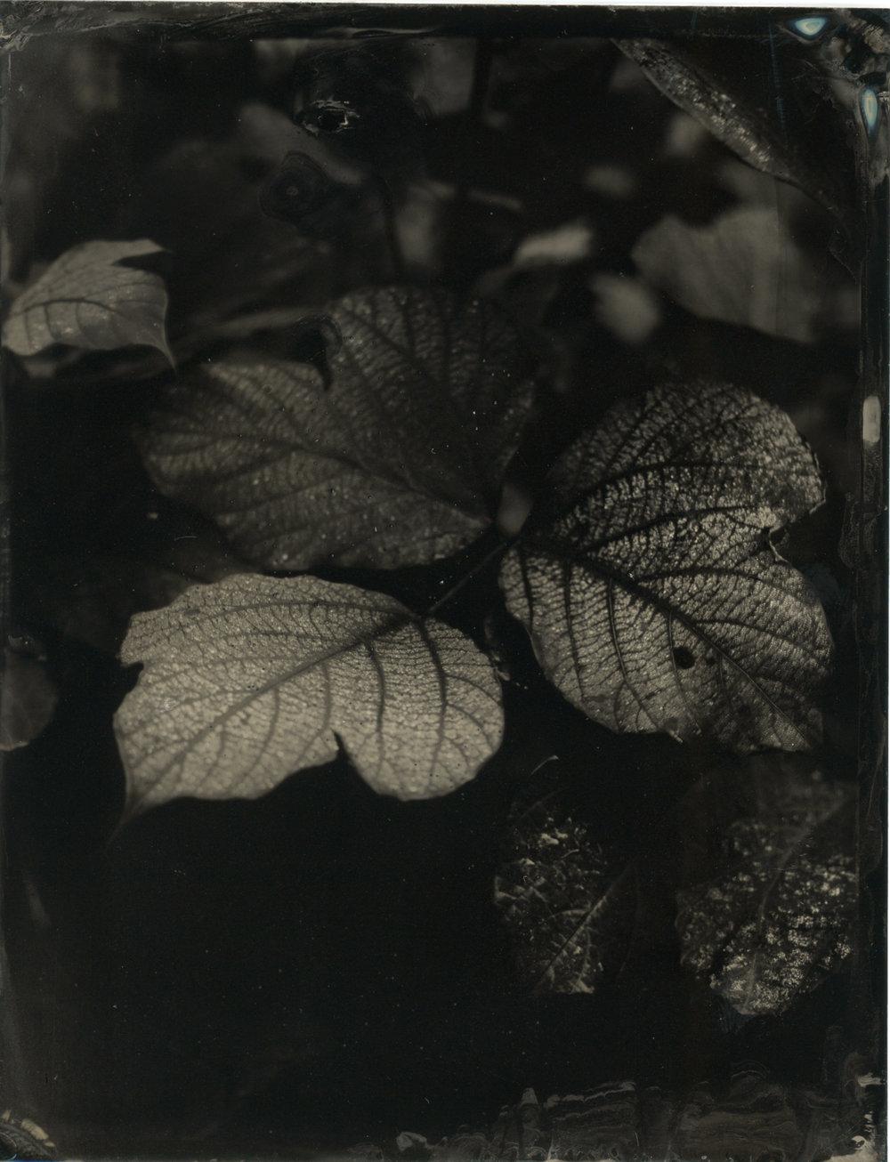 CollodionLandscapes-48.JPG