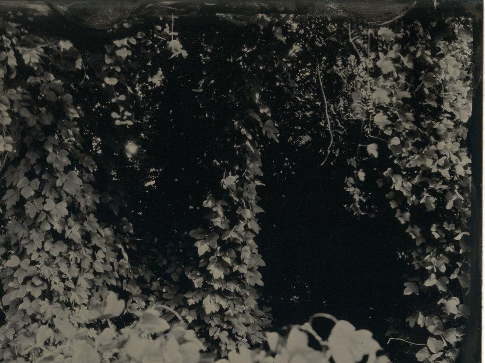 CollodionLandscapes-28.JPG