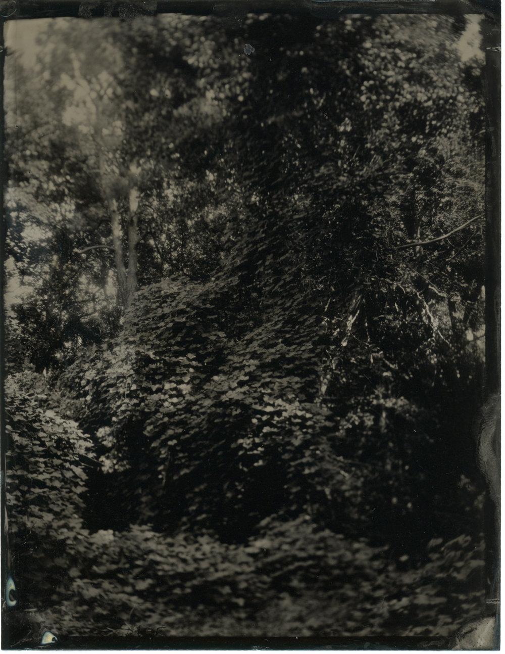 CollodionLandscapes-44.JPG