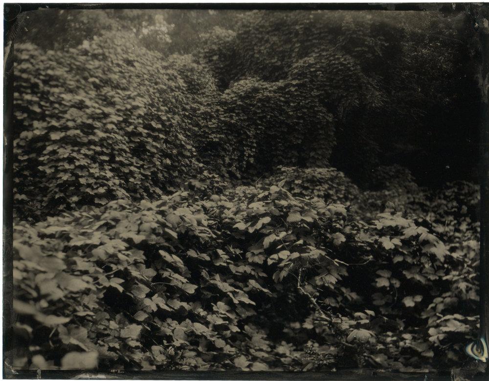 CollodionLandscapes-41.JPG