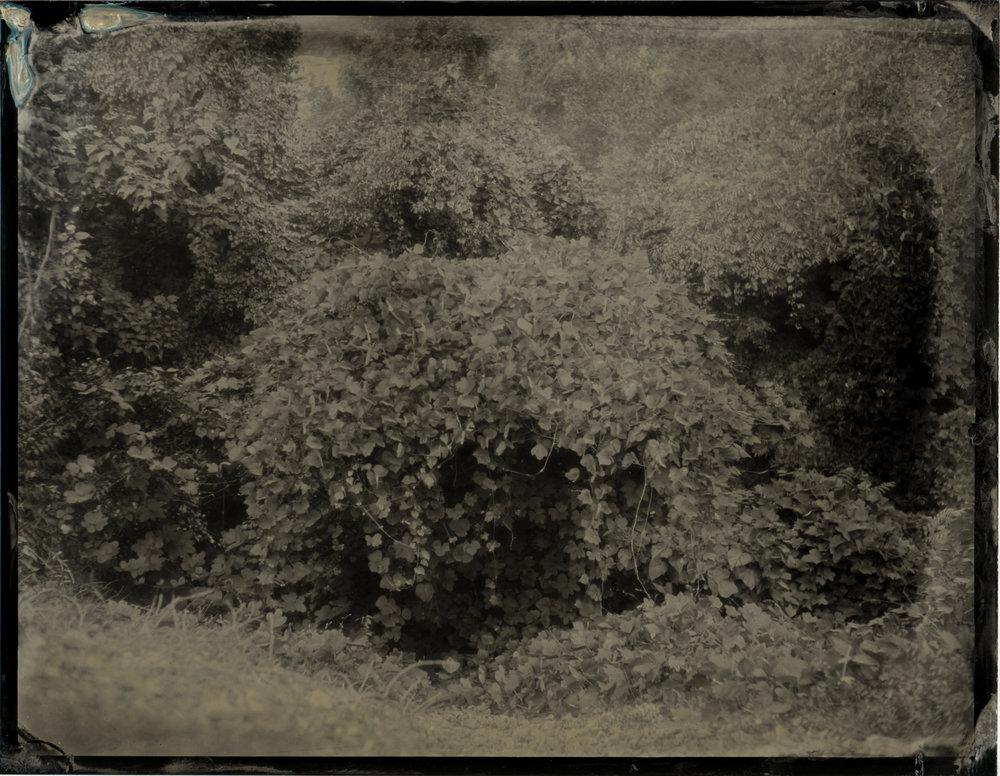 CollodionLandscapes-38.JPG