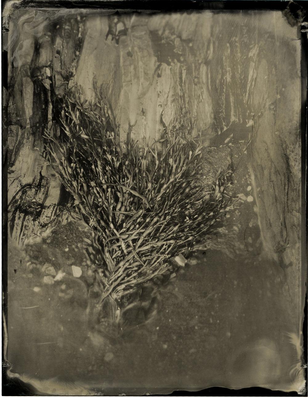 CollodionLandscapes-49.JPG