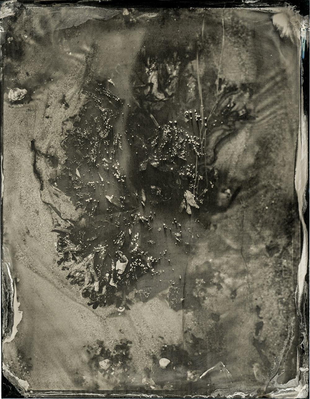 CollodionLandscapes-53.JPG