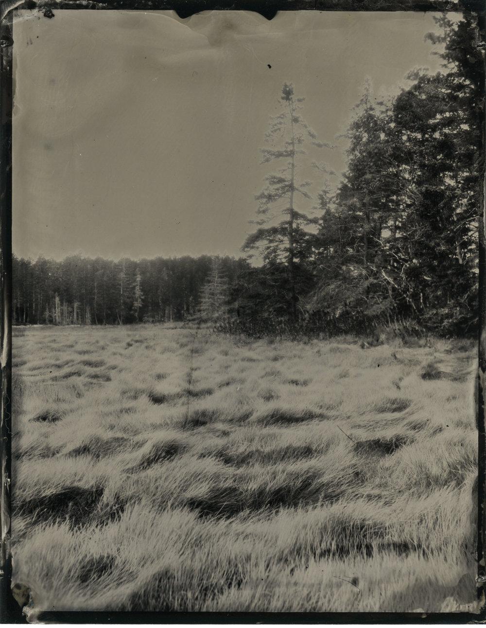 CollodionLandscapes-56.JPG