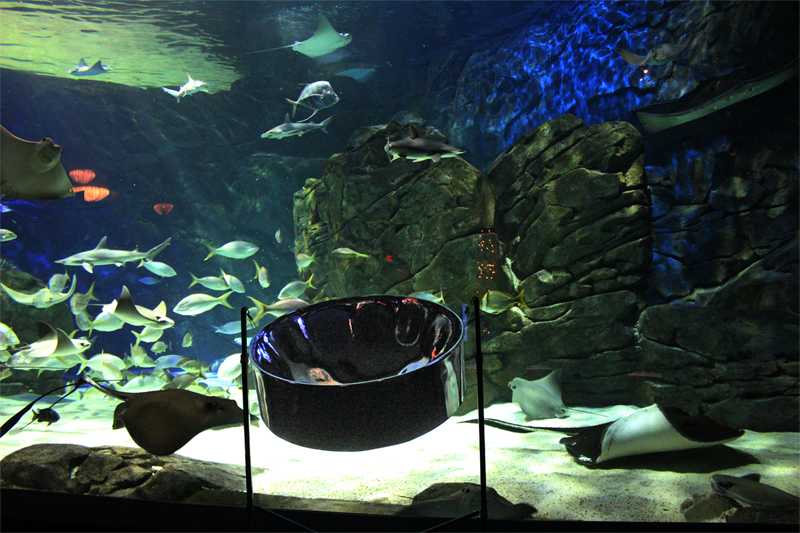 steelpan_ripleys_aquarium.jpg
