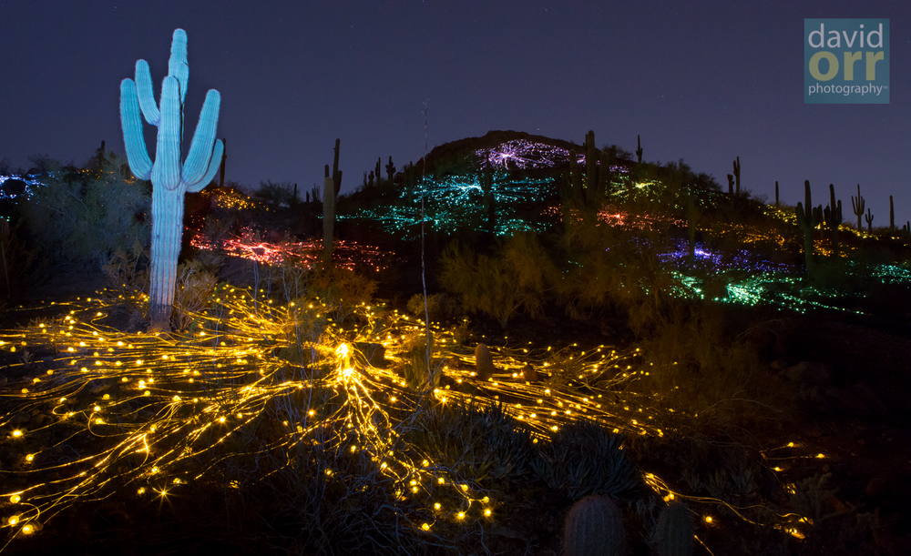 Artist Bruce Munro S Sonoran Light Installation At Desert