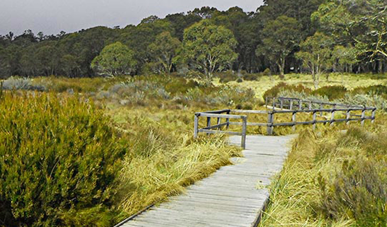 Polblue Swamp Walking Track, Barrington Tops National Park. Photo NSW Government.