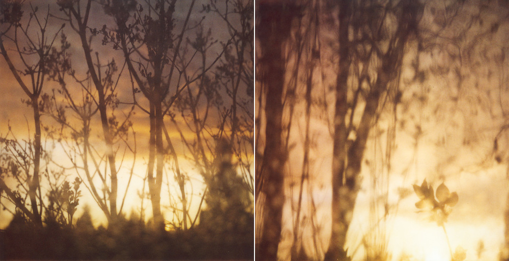 pola_diptych_waterytrees_1500px.jpg