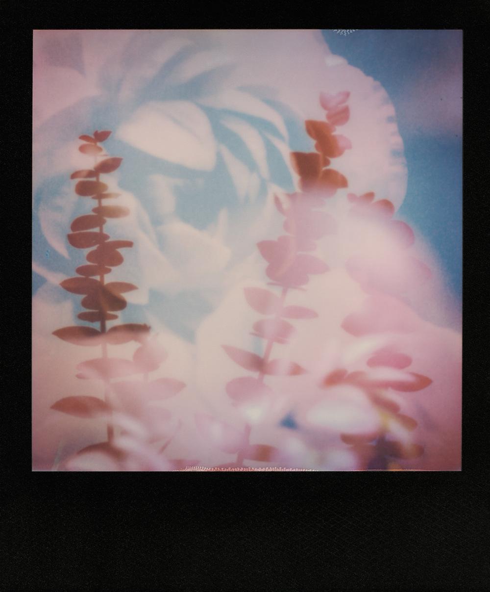 pola_ranunculus_eucalyptus_1500px.jpg