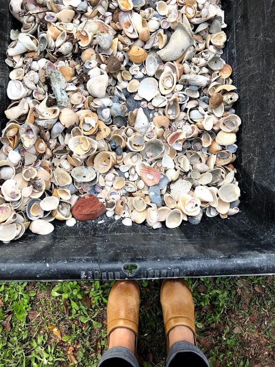 Shells_Richard_Munster_FL.jpg