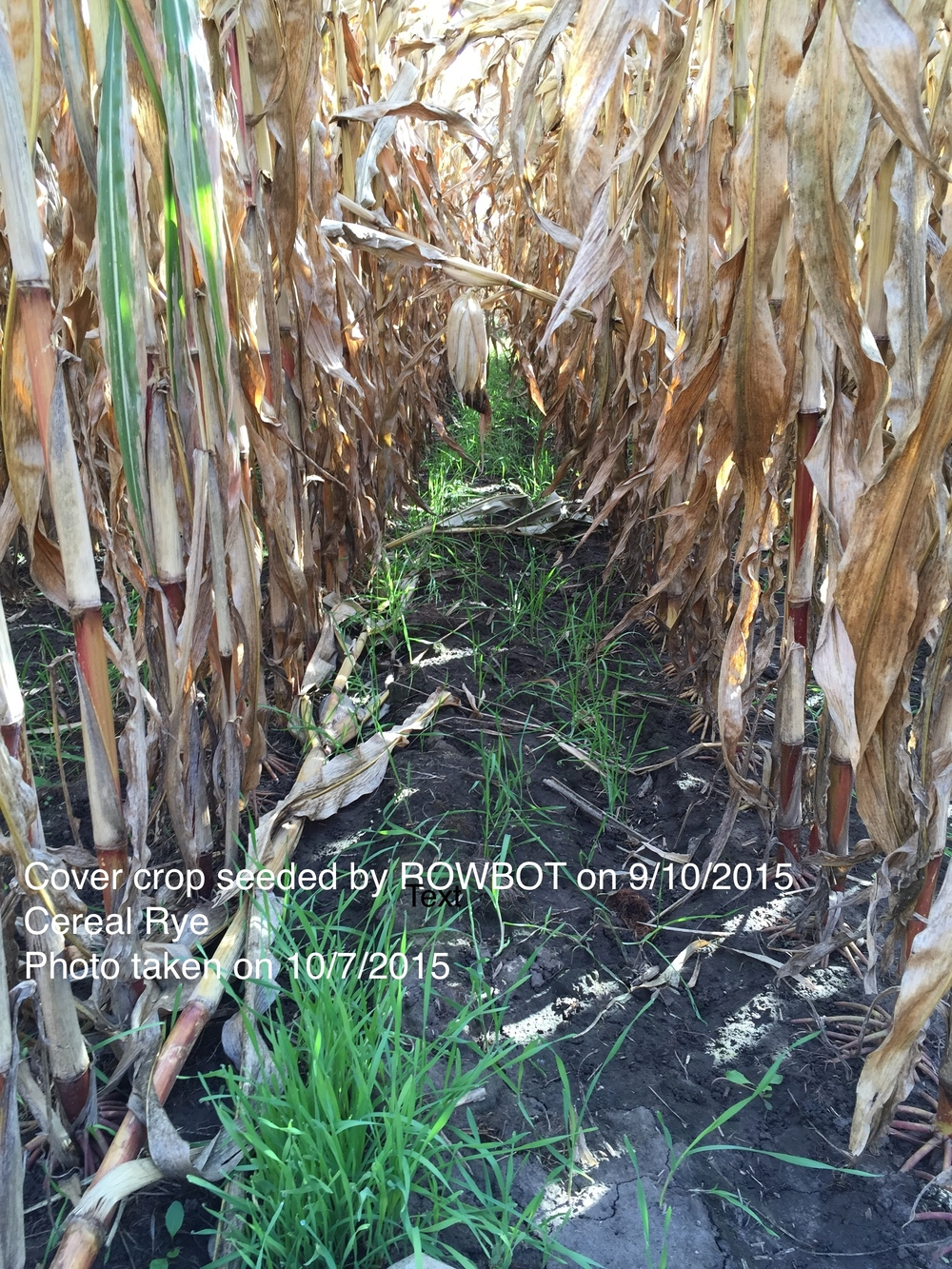 ROWBOT_rye_10sep15planted_raw.jpg