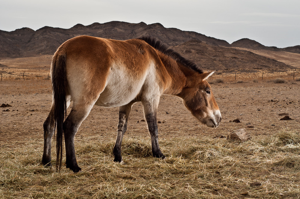 PJJ_Mongolsko2011_02539_20.10.jpg