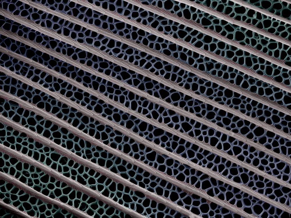 Detail podkladové šupinky spodní vrstvy otakárkaP. ulysses. SEM, zvětšení 3 700×