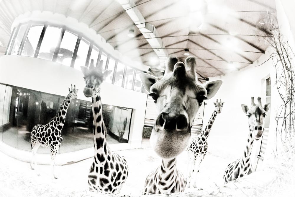 Zoo Praha, 29. října 2012 Dnešní momentka, zase GoPro, tentokrát cíleně experimentálně :-)