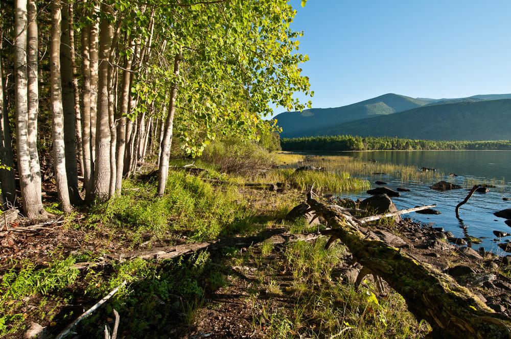 Tajga na břehu jezera Frolicha