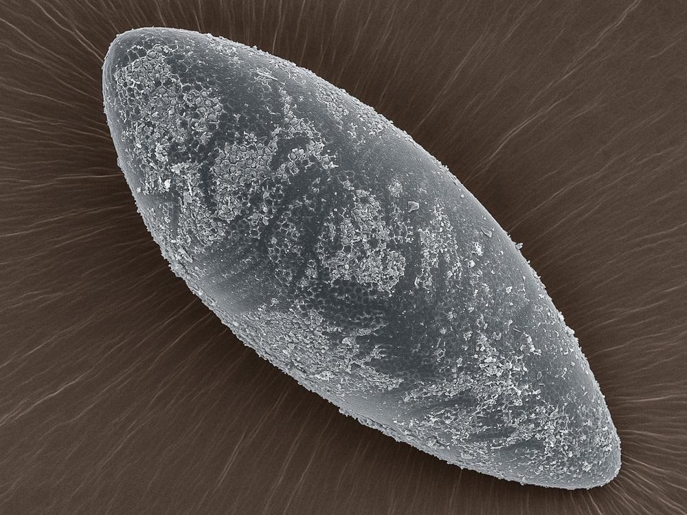 Aedes - HMDS - 1 a x.jpg