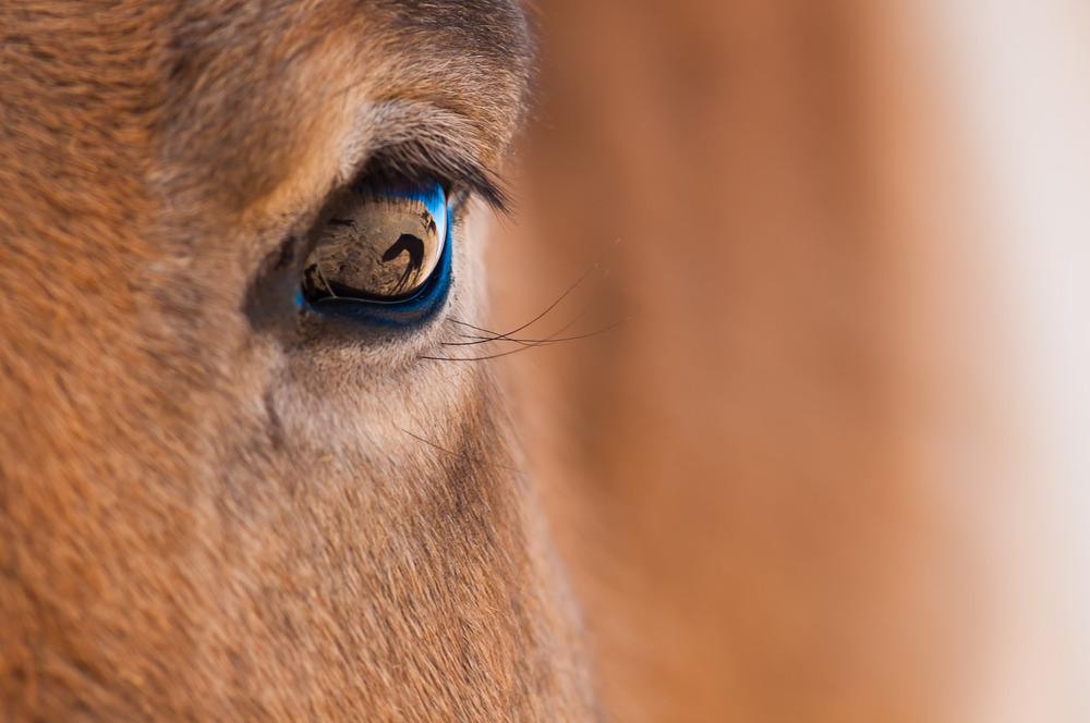 Krásy Mongolska očima fotografa Petra Juračky