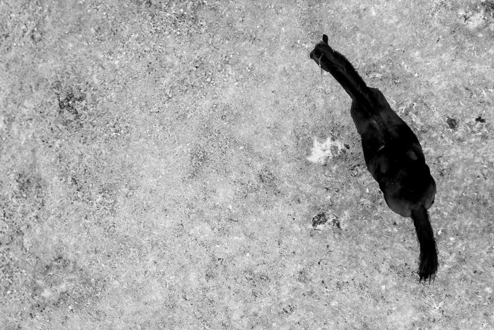 25. září 2013 Nebývá vhodné fotit postavy při těle z boku, neboť tak ještě více vyniknou jejich kypré tvary. Stejně tak není vhodné fotografovat portréty příliš zblízka širokoúhlým objektivem, neboť portrétovaná postava získává nadpřirozeně velký nos a deformovaný obličej. A fotit tohle zvíře shora, za to už bych se příště nějak potrestal Poznali jste jej na první, nebo až druhý (n-tý) pohled? Ne, kokon pijavice to fakt není