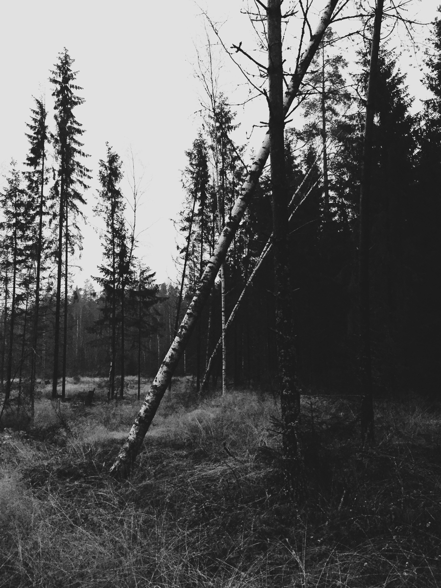 fin-541.jpg
