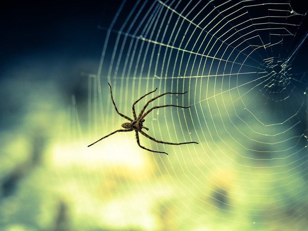 spider-1034338_1920.jpg
