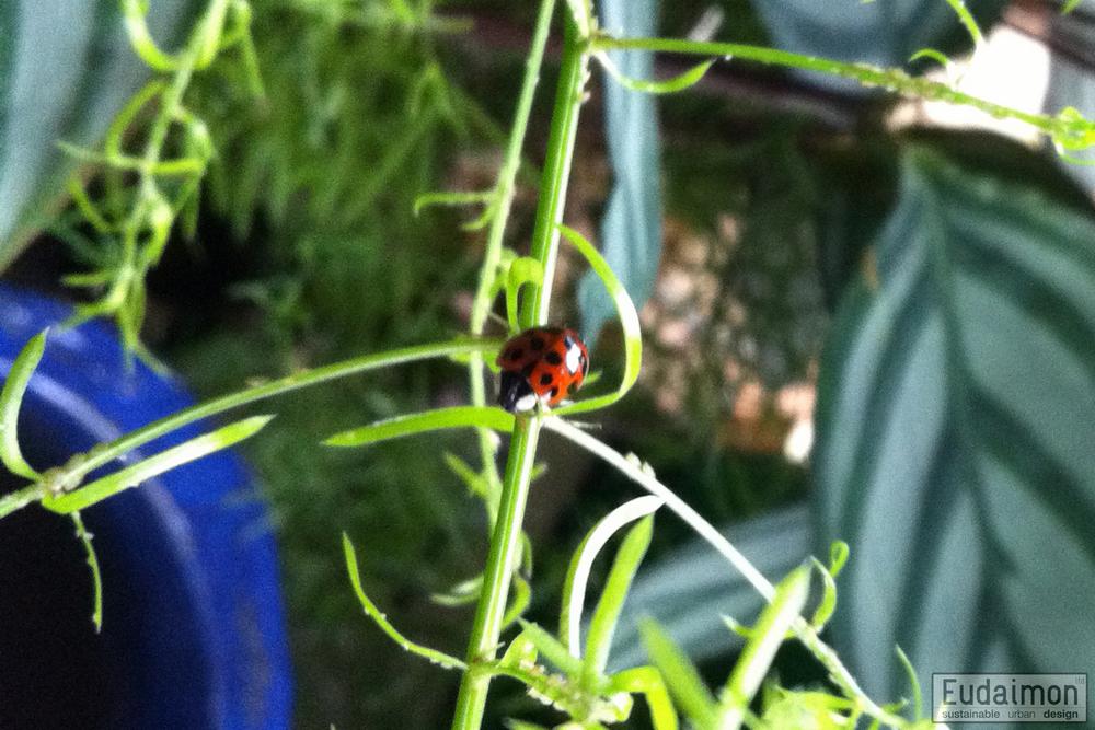 Madame Ladybird