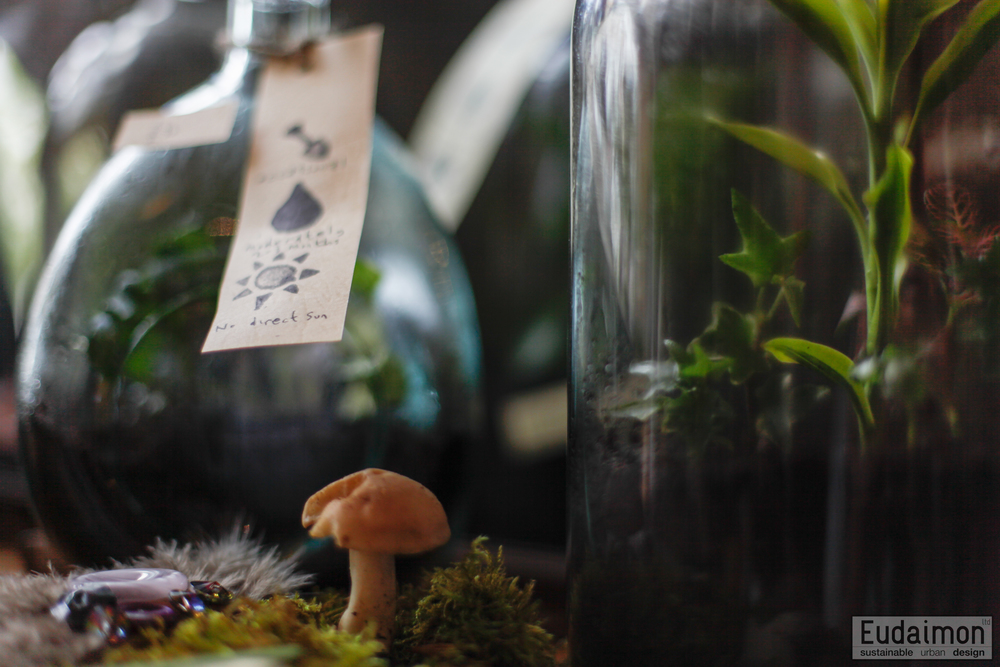 terrariums (4 of 11).jpg