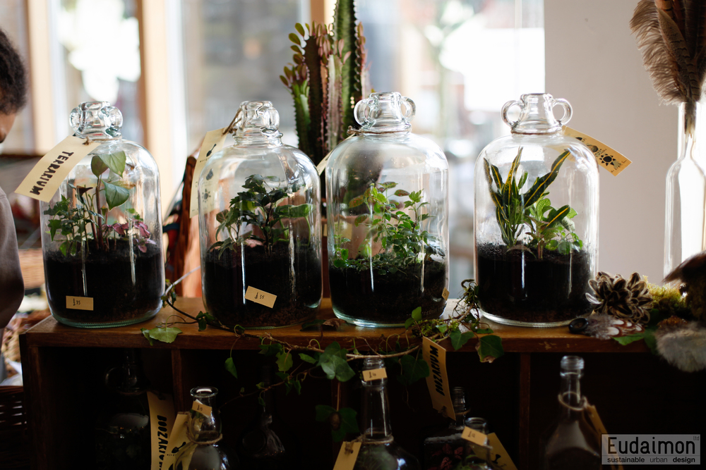 terrariums (5 of 11).jpg