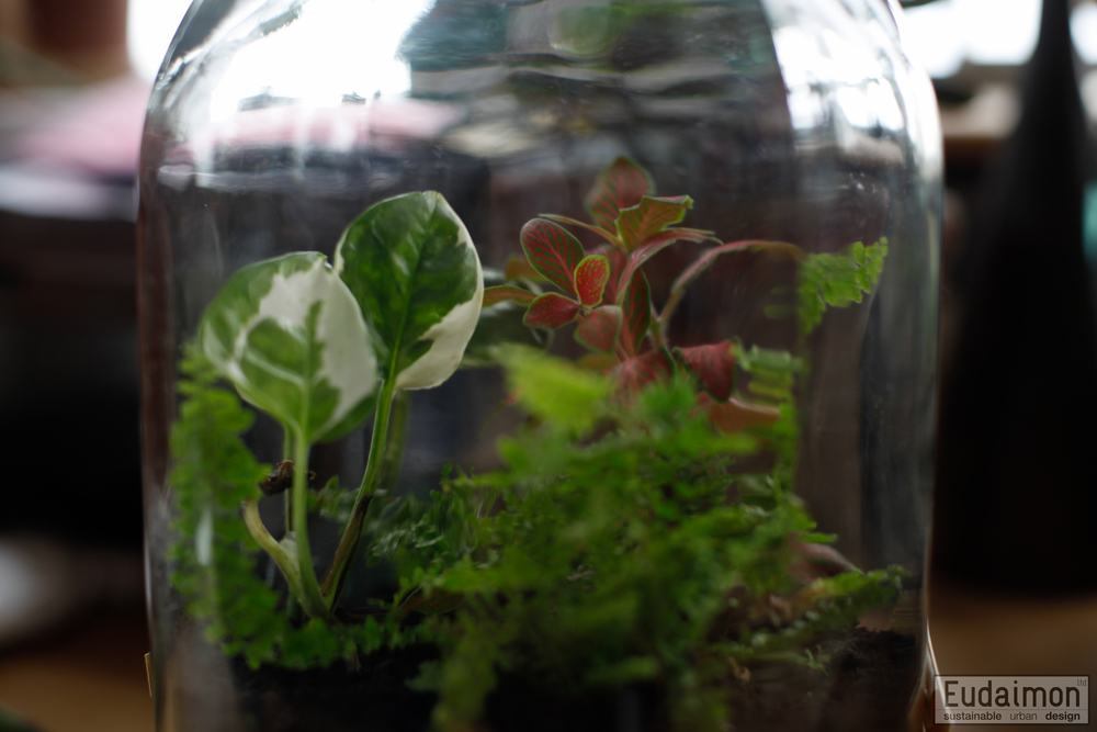 terrariums (10 of 11).jpg